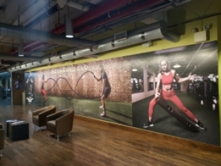Wall Window Graphics
